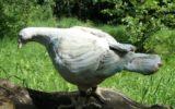 gołębie-rzeźba ogrodowa