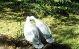 gołębie-rzeźba ceramiczna